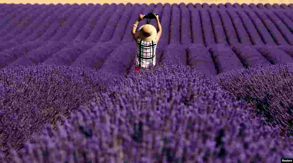 عکس سلفی گردشگر چینی درمزرعه ای پوشیده از گل در فرانسه