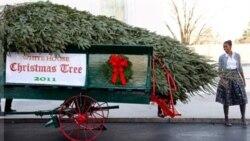 برپایی درخت رسمی کریسمس در کاخ سفید