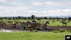 Pemandangan alam dan satwa di konservasi Ol Pejeta, Kenya, 1 Mei 2020. (Foto: dok).