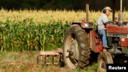 Tom Chino plows a section of his family farm in California with a tractor. Mr. Chino chooses to farm organically.