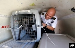 Wings of Rescue co-pilot Jose G. Martinez reaches for one of the last of a load of 35 dogs from Texas shelters flown to make space for companion animals rescued in the Hurricane Harvey aftermath, in Seattle, Aug. 30, 2017.