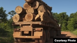 Ở Việt Nam, các tội phạm kiếm tiền được nhiều nhất là tội phạm kinh tế, đặc biệt trong ngành gỗ và các sản phẩm về động vật quý hiếm.