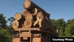 The UN said in 2012 that between 30 and 100 billion dollars are lost each year to the illegal trade in timber.
