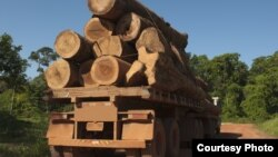 FILE - Trees are trucked out of the rainforest in this file photo. Brazil's largest grocery chain has pledged to stop selling beef produced on deforested land in the Amazon rainforest.
