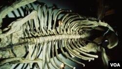 La especie recientemente descubierta era herbívora y vivió hace aproximadamente unos 200 millones de años.