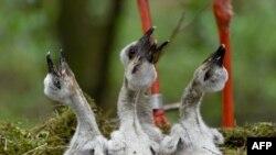 Meksika bilan AQSh o'rtasidagi devor ekologik muvozanatni buzishi mumkin