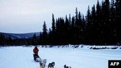 Xe trượt tuyết do chó kéo