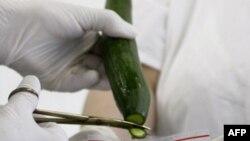 Các chuyên viên lấy mẫu dưa để thử nghiệm xem có nhiễm vi khuẩn E. Coli không.