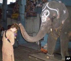 صحت: ہاتھی کی آشیرباد یا ٹی بی کا مرض
