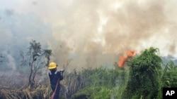 Pemadam kebakaran berusaha memadamkan api di hutan di Riau, Februari 2014. (AP/Ronny Muharrman)