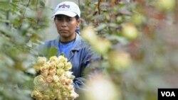 El 70 por ciento de las exportaciones ecuatorianas a EE.UU. se benefician de las preferencias.