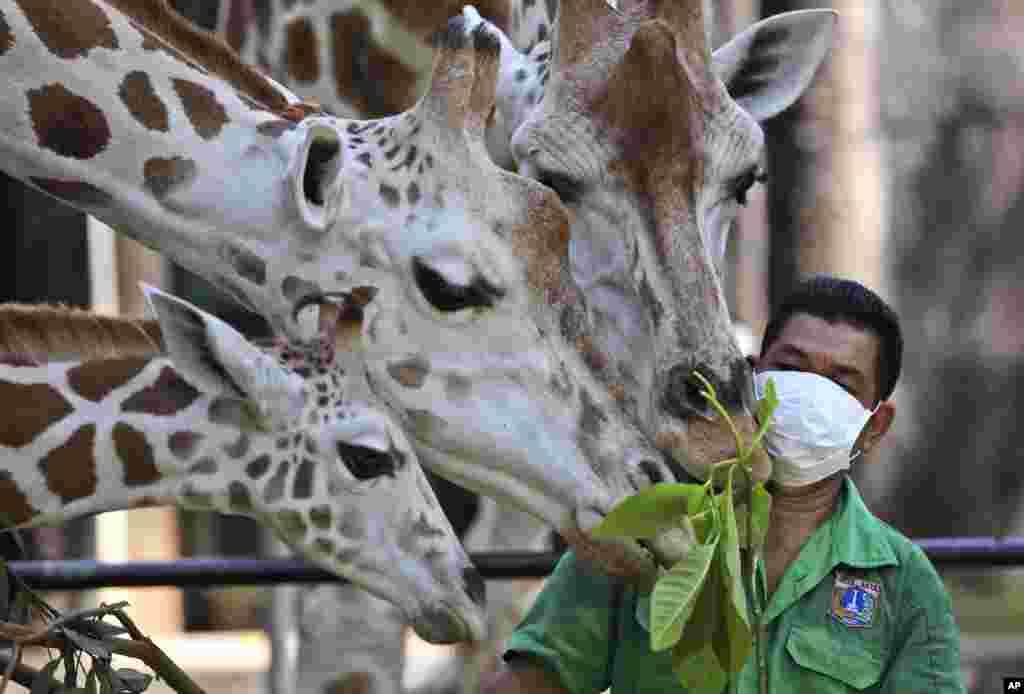 Indoneziyada hayvonot bog'lari ochilmoqda