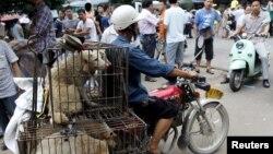 Dog- yulin