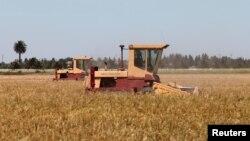 지난해 캘리포니아 데비스의 센트럴 밸리에서 농부가 밀을 수확하고 있다.