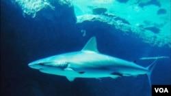 Las autoridades de Seychelles cerraron algunas playas y tratan de capturar al tiburón.