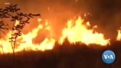 Brazilians Worry Fire Season Will Bring Even More Forest Destruction