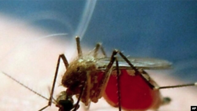 US scientists are experimenting with a compound of anti-malaria drugs that kill the parasite in its dormant liver stage.