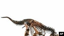 Tyrannosaurus rex at the Natural History Museum of Los Angeles County
