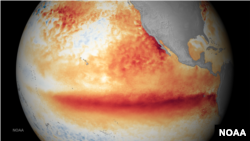FILE - This image shows the satellite sea surface temperature departure for the month of October 2015, where orange-red colors are above normal temperatures and are indicative of El Nino.