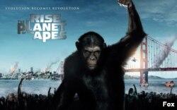 قیام سیاره میمون ها - ۲۰۱۱
