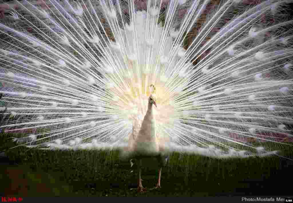 باغ پرندگان اصفهان عکس: مصطفی معراجی
