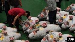 Para pembeli, pekerja, dan juru lelang dalam lelang tuna pertama di pasar ikan baru Toyosu, hari pertama pembukaan pasar ikan tersebut di Tokyo, 11 Oktober 2018.