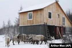 Kuda Yakutian terlihat di luar kabin penjaga di Taman Pleistosen, hutan belantara seluas 40.000 hektar di Siberia utara, Rusia. (Foto: AP/Arthur Max)