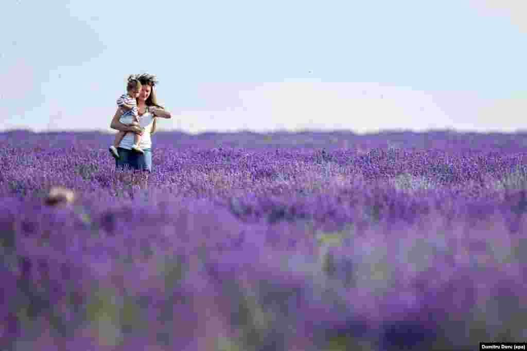 ម្តាយម្នាក់ពរកូនស្រីរបស់គាត់ដើរកាត់វាលផ្កាឡាវេនឌ័រ (lavender) នៅពិធីបុណ្យផ្កាឡាវេនឌ័រដែលត្រូវបានធ្វើឡើងនៅវាលផ្កាឡាវេនឌ័រ នៅក្បែរភូមិ Cobusca Noua ក្នុងប្រទេសម៉ុលដាវី (Moldova) កាលពីថ្ងៃទី១៨ ខែមិថុនា ឆ្នាំ២០១៦។