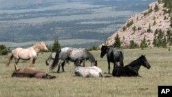 Peneliti mengatakan populasi kuda peliharaan pertama terbentuk di padang rumput Eurasia barat sekitar 5.500 tahun yang lalu.