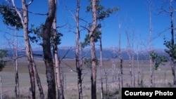 A seca é uma das consequências da mudança climática
