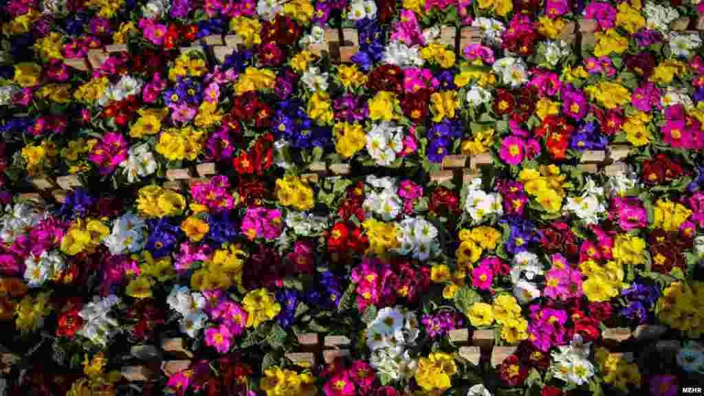 بازار گل تهران در آستانه سال نو. عکس: مریم کامیاب، مهر