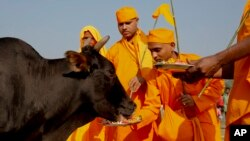 Hindu devotees feed a cow after performing Pind Daan rituals, believed to bring peace to the souls of ancestors, on the banks of the River Ganges, in Allahabad, India, Oct. 9, 2015.