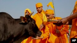 Des hindus donne à manger à un boeuf, un animal sacré dans ce pays, à Allahabad, Indie, le 9 octobre 2015.