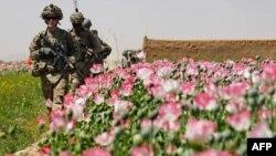Fushat me opium në Britani dhe Afganistani