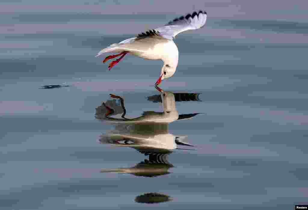 A seagull flies above water in Sidon, Lebanon.