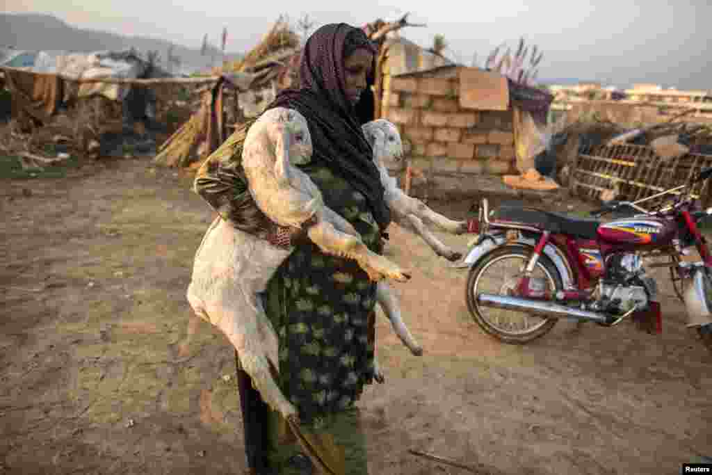A woman, whose family moved to Islamabad from Sargodha in Punjab Province to look for jobs, carries goats near her makeshift shelter in Islamabad, Pakistan.