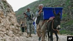 阿富汗选举工作人员用驴子运送票箱和选举资料(2014年4月3日)