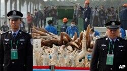 中国海关官员在广东东莞销毁非法象牙制品 (2014年1月6日)