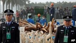 中国海关官员在广东东莞销毁非法象牙制品 (2014年1月6日资料照)