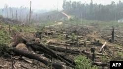 Šumska područja se poslednjih decenija smanjuju velikom brzinom