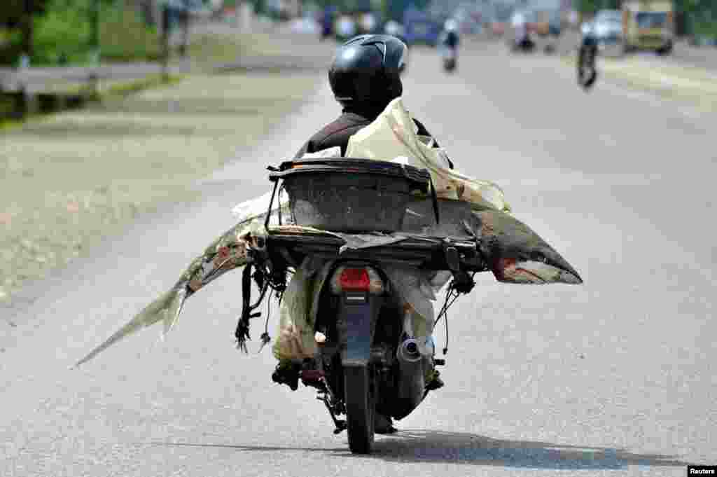 A fishmonger carries a shark on his motorcycle in Padang, West Sumatra, Indonesia, in this photo taken by Antara Foto.