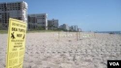 """Los operadores turísticos temen que haya una """"crisis de percepción"""" de que las playas están dañadas."""