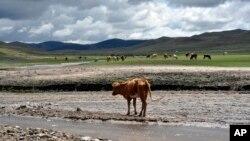 內蒙古大草原。