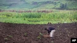 A farmer sows a potato field in Abugarama, a mountain village near Bujumbura, Burundi, Dec. 14, 2015.