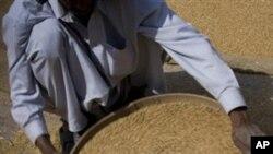 بیرونی تجارت سے غذائی قلت پر قابو پایا جاسکتا ہے