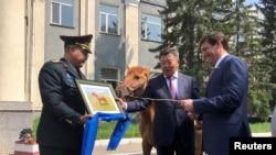 美国国防部长埃斯珀(右)2019年8月8日访问蒙古乌兰巴托时接受一匹蒙古马为礼物。
