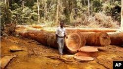 Un homme debout dans une clairière de la forêt tropicale au Cameroun, en Afrique, photo non datée.