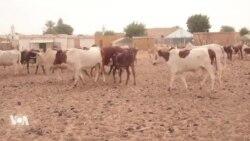 L'Etat mauritanien investit dans les campagnes pour freiner l'exode rural