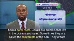 Phát âm chuẩn - Anh ngữ đặc biệt: Sunscreen and Coral Reefs (VOA)