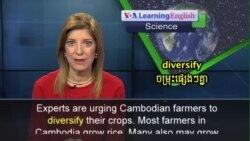 Cambodian Farmers Growing More Vegetables